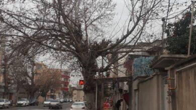 تصویر به بهانه ی روز درخت کاری